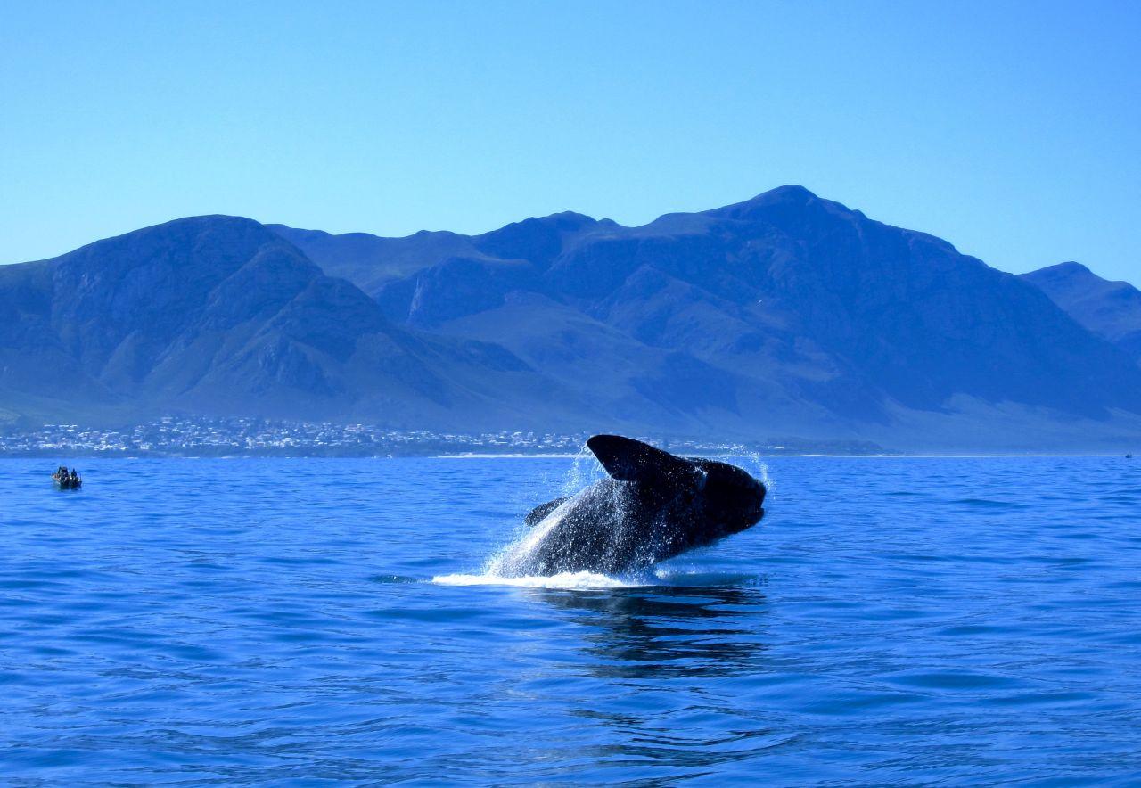 golf-expedition-golf-reis-zuid-afrika-colourful-manor-walvis.jpg